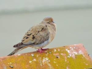 ahuyentador_aves