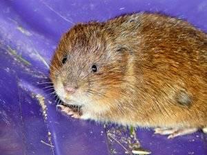 ahuyentar_ratones