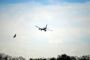 control de aves en helipuertos y aeropuertos