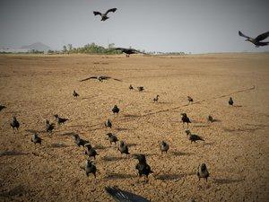 ahuyentar cuervos
