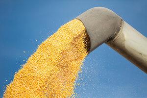 cultivo-maiz