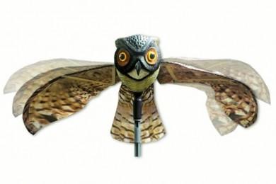 buho-espantapajaros-prowler-owl