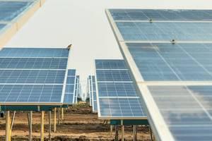 centrales-solares-pajaros