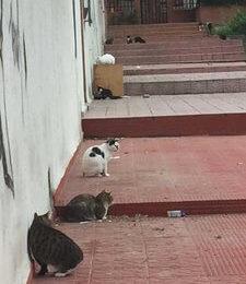 ahuyentar_gatos