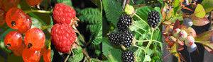 frutos-del-bosque-referencia-birdgard-gobierno-de-la-rioja