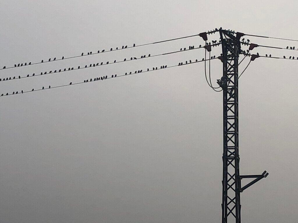 ahuyentar-estorninos-cables-media-tension