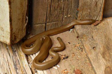 ahuyentar-serpientes-culebras