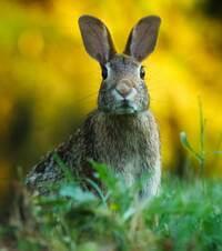 medidas-dano-conejos-agricultura